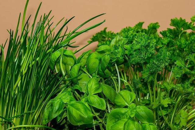 kulinářské byliny